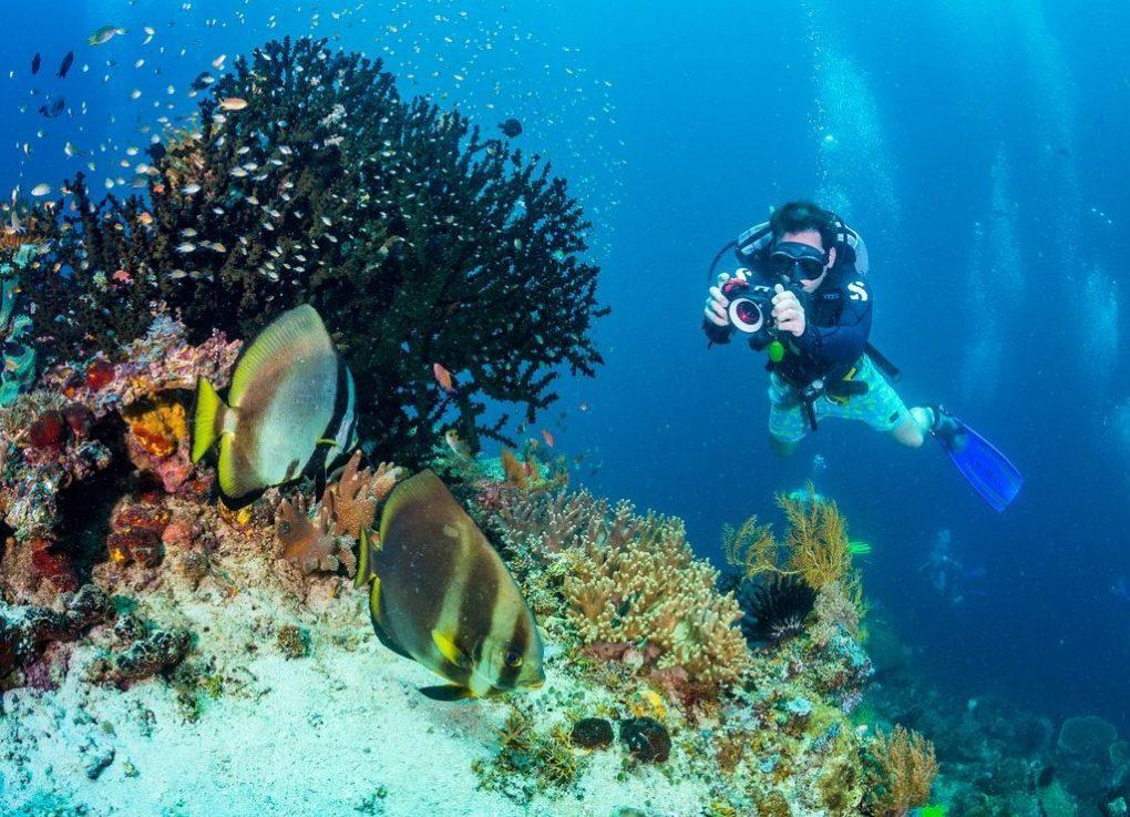 Spot Olahraga Menyelam Terbaik di Indonesia